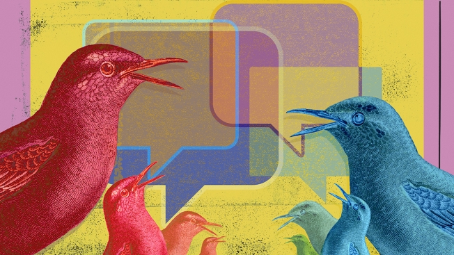 twitter-birds-talking-hed-2015